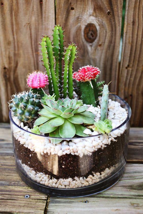 Centro de mesa de cactus