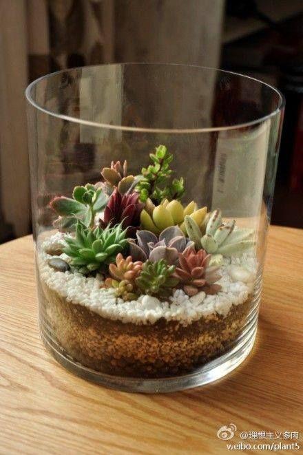 Jarrón de cactus