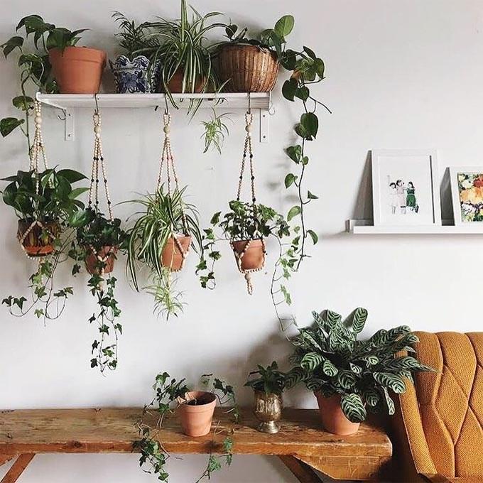 Plantas colgantes en estantería