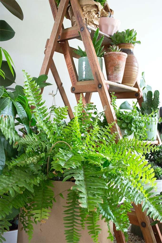 Plantas colgantes de interior en escalera