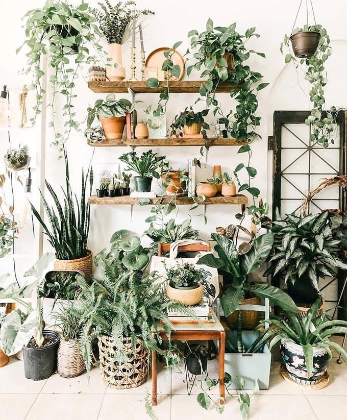 Las 9 Plantas Colgantes De Interior Más Fáciles De Cuidar Mi Casa Top