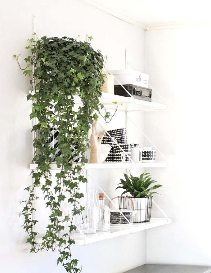 Plantas colgantes en estanterías