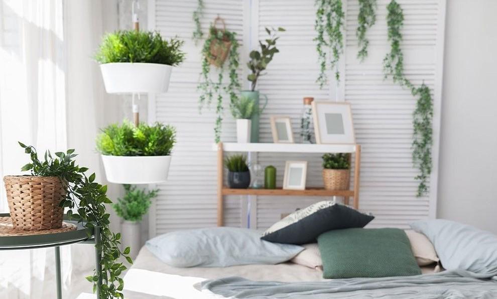 Plantas colgantes de interior - Banner